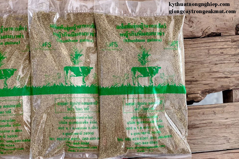 Bao bì giống cỏ sả lá lớn Ghine Mombasa
