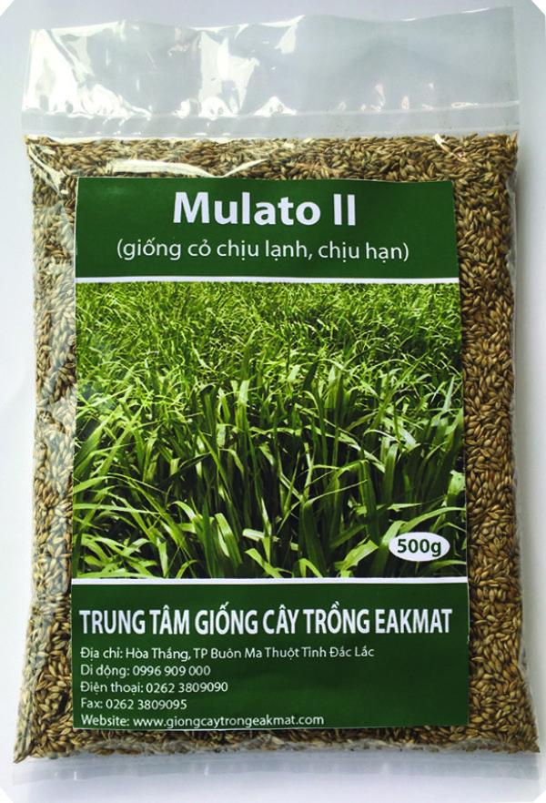 Bao bì giống cỏ Mulato2