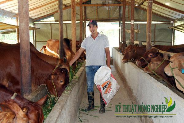 Làm giàu tư mô hình nuôi bò lai nhốt chuồng ở Bình Phước