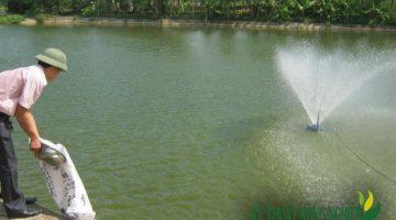 Độ sâu thích hợp của ao nuôi cá trắm cỏ