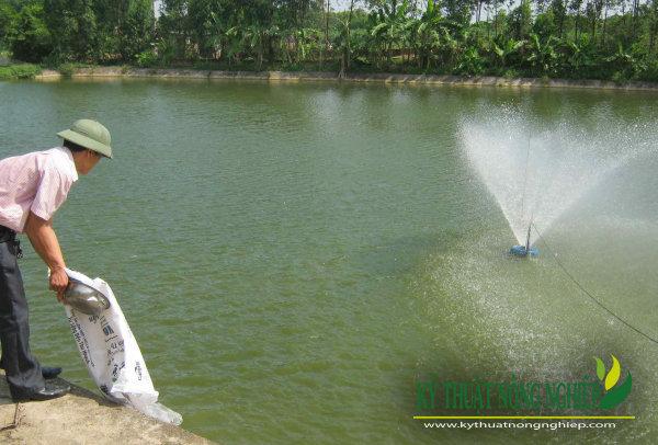 Diện tích ao nuôi cá trắm cỏ khoảng từ 400 – 1000 m2