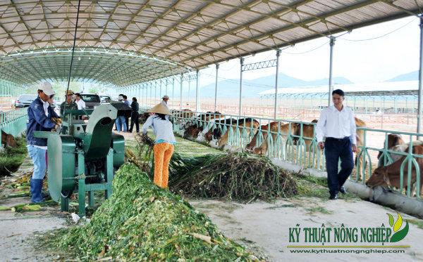 Giống cỏ nuôi bò sinh sản