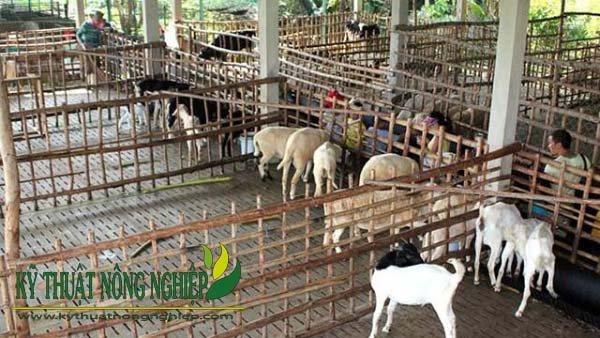 Vách ngăn trong chuồng nuôi nhốt dê