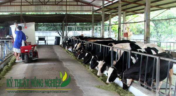 Kỹ thuật chăn nuôi bò sữa