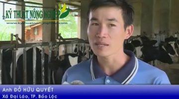 Nuôi bò sữa lãi 1 tỷ đồng một năm