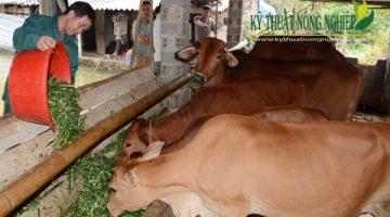 Phát triển chăn nuôi bò thịt tại tỉnh Đồng Nai