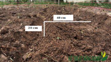 Chăm sóc đàn bò và đồng cỏ trong mùa lạnh, hanh khô