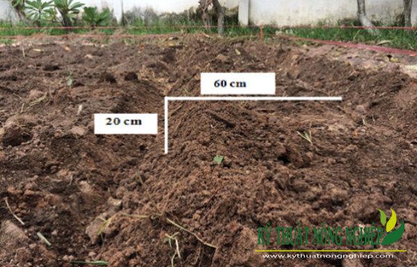 Cày bừa đất trồng cỏ
