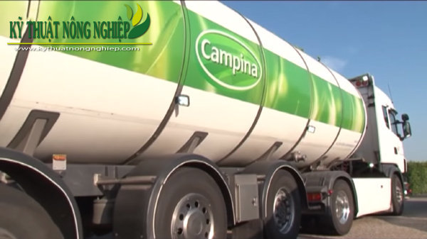 nuôi bò sữa ở Hà Lan
